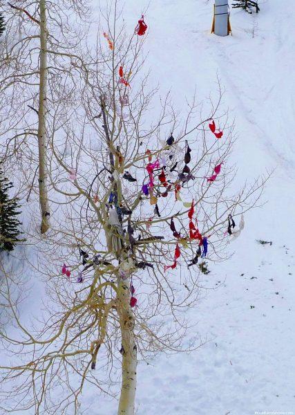 Snowbird-UT_Mardi-Gras-Tree_p1020353_1274x1790